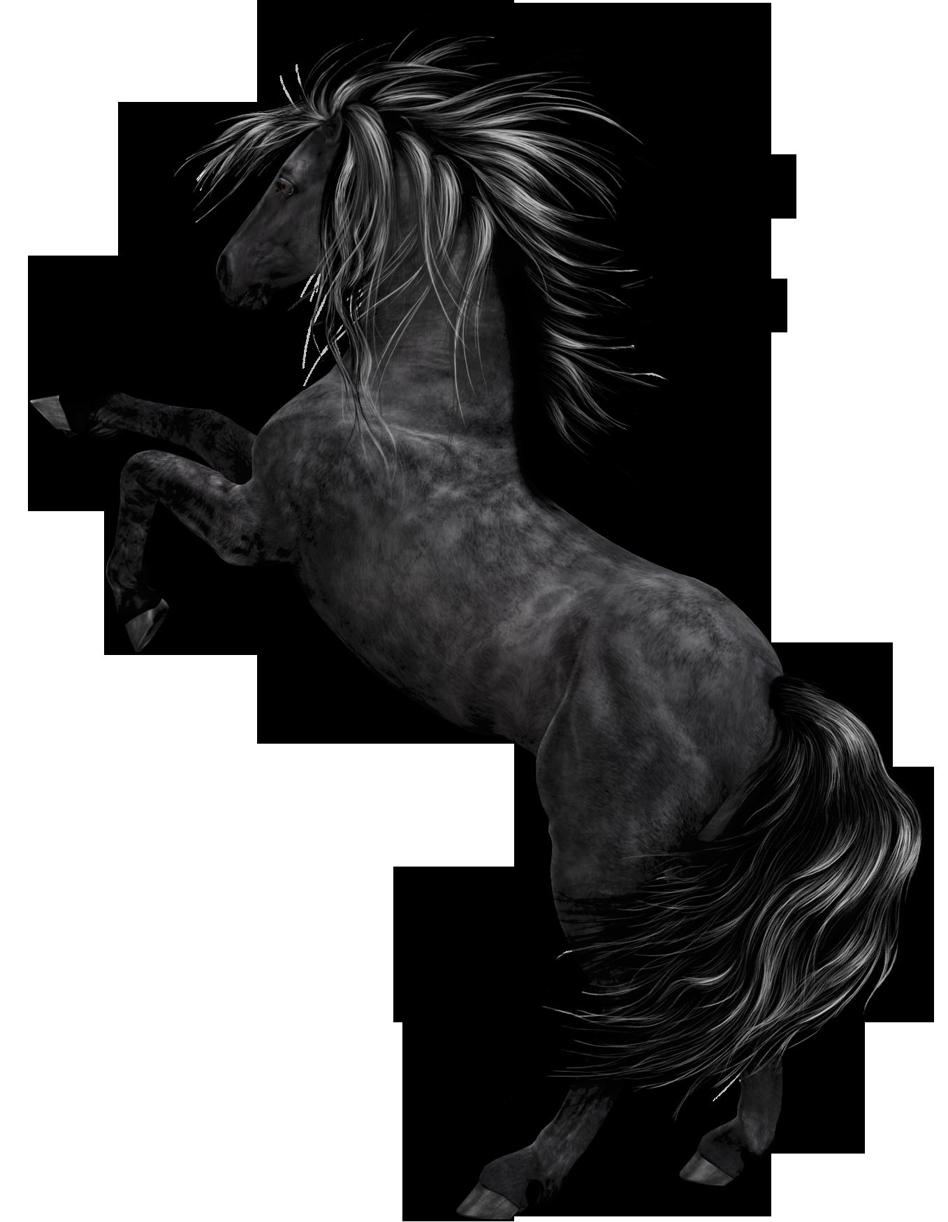 Black Horse Art Horse Art Black Horse Horses