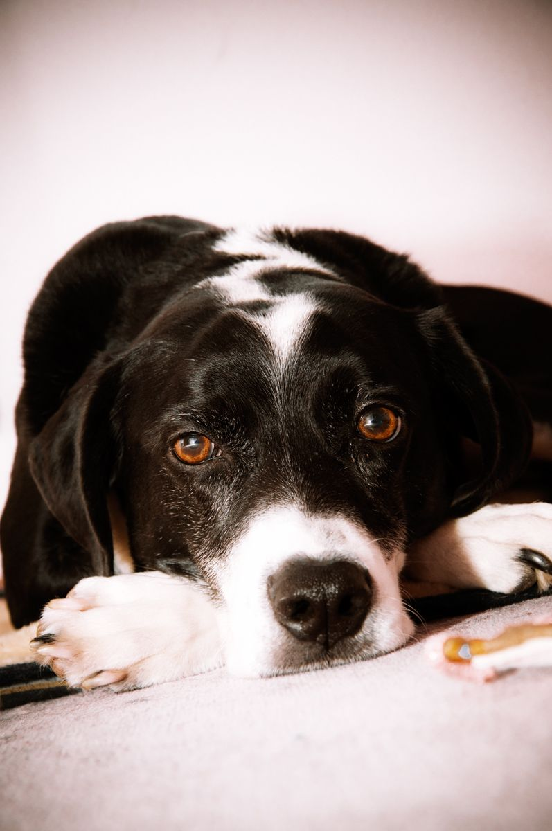 Just a matter of time for my cute dog to get here. Lovely Pointer, isn't it?!