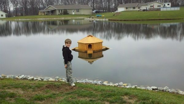 diy floating duck palace.. | duck house, pond and gardens