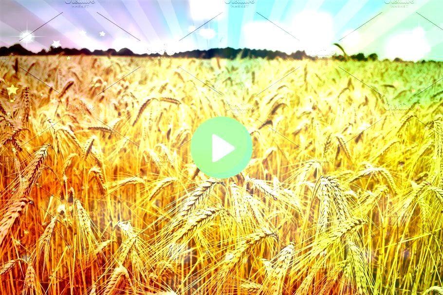 wheat field by Irene Loal on creativemarketphotography SponsoredTriticum wheat field by Irene Loal on creativemarketphotography Sponsored Photographic Print Wheat Field i...