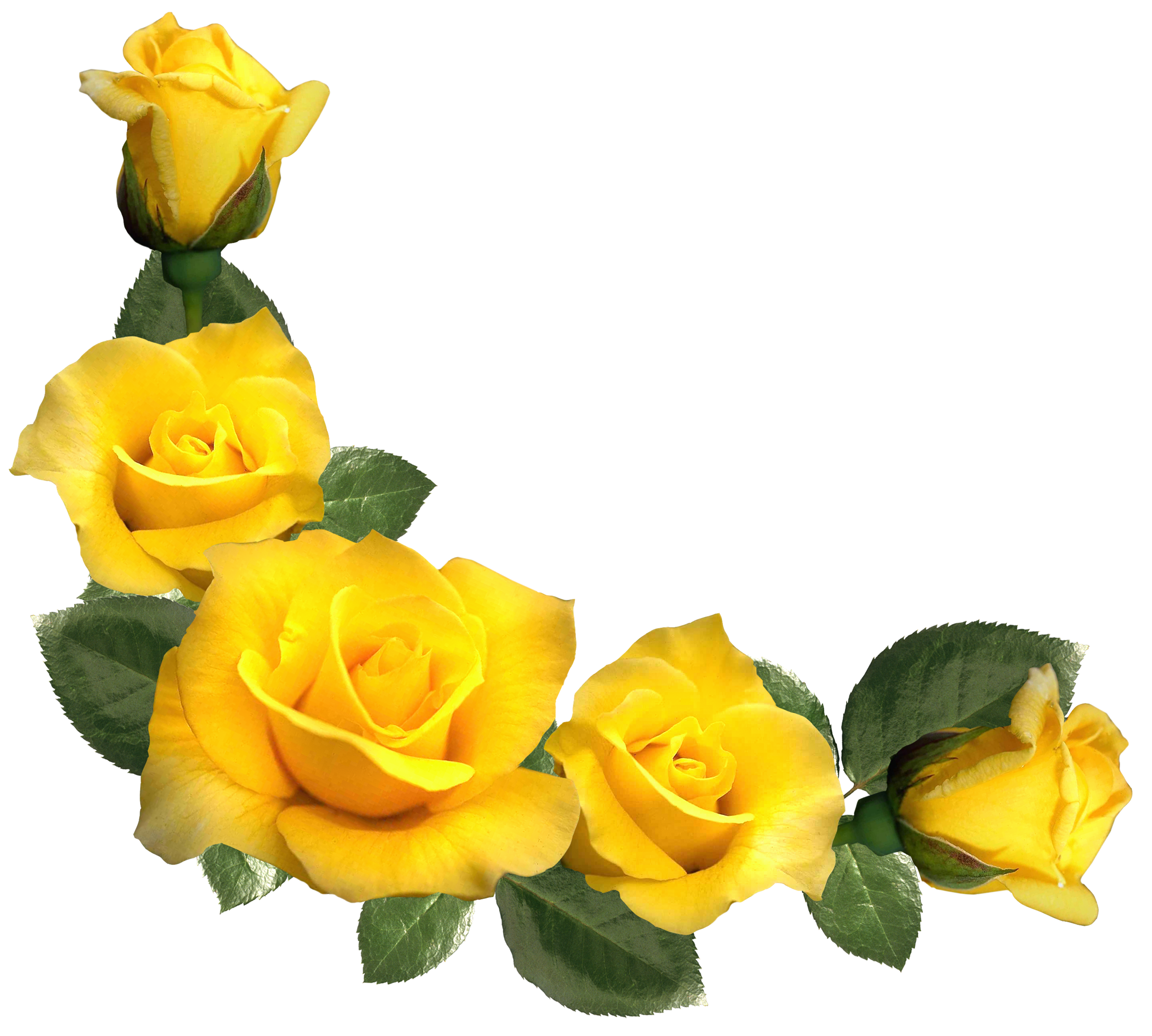 Beautiful Yellow Roses Decor PNG Clipart Image | Rose Pics ...