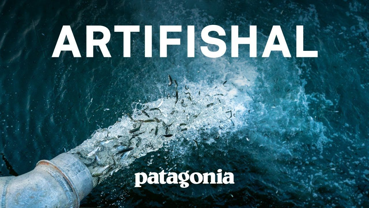 Artifishal The Fight To Save Wild Salmon Fish Hatchery Salmon