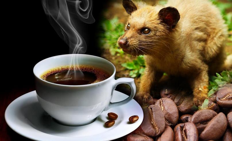 Indonesia - quê hương cà phê Chồn độc đáo - Đại lý Cebu Pacific