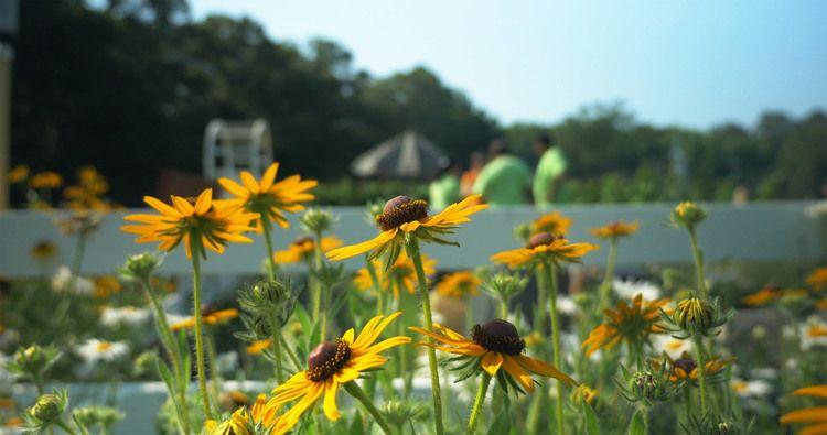 Plant Pop -- Nimmo Community Garden