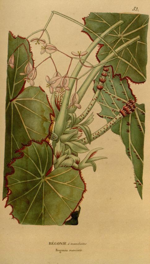 v.10 (1841-1842) - Annales de flore et de pomone : - Biodiversity Heritage Library