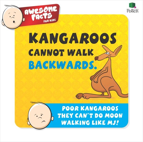 Kangaroo Fact For Kid
