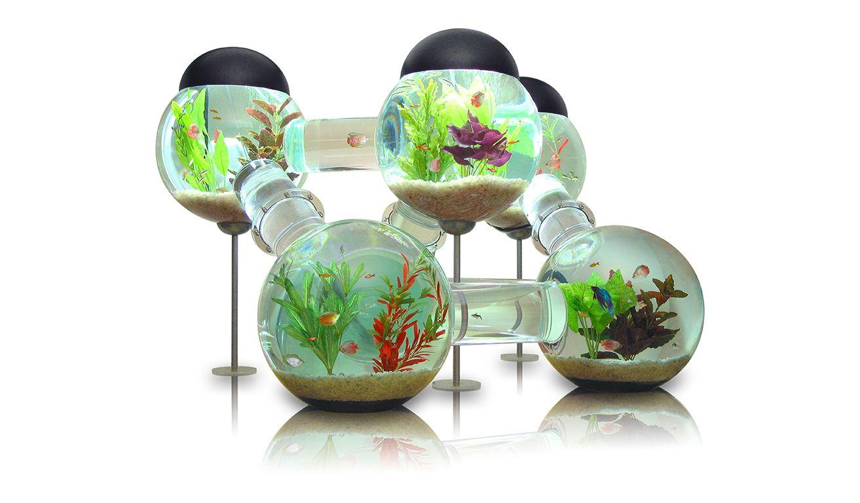 les 25 meilleures id es de la cat gorie aquarium poisson sur pinterest poissons aquarium. Black Bedroom Furniture Sets. Home Design Ideas