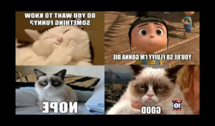 Clean Funny Memes 2018 Funny Cartoon Memes Clean Funny Memes Super Funny Memes