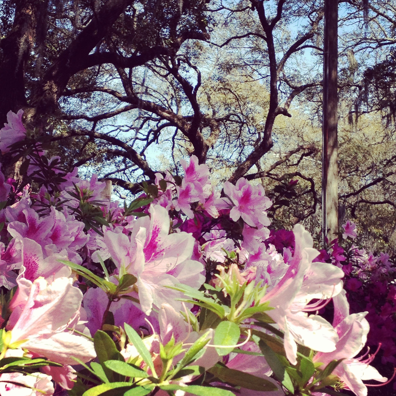 Savannah Is Glorious In The Spring!
