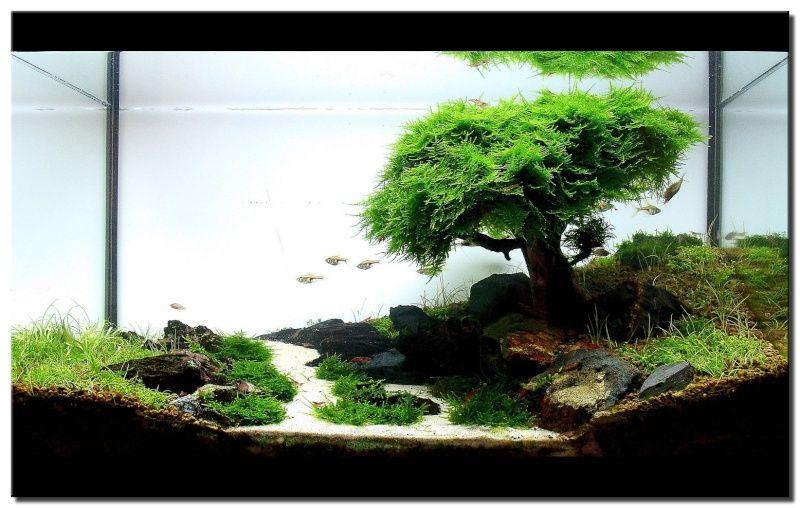 bonsai en un acuario buscar con google