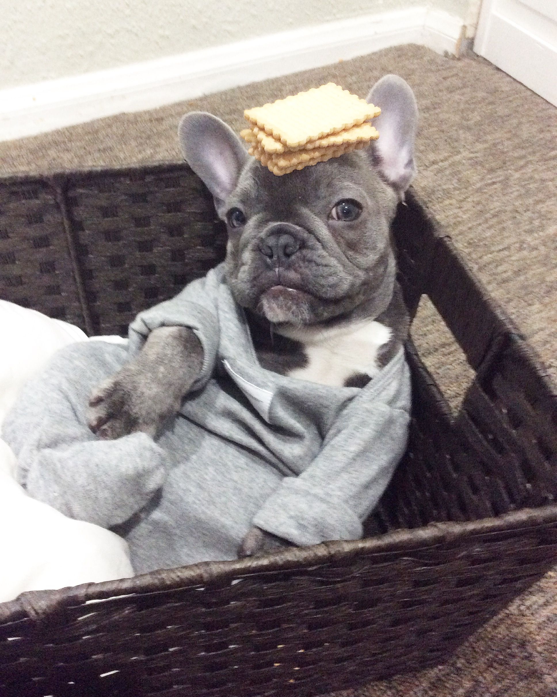 Bluenjy The French Bulldog In A Onesie From Www Thefrenchiestore