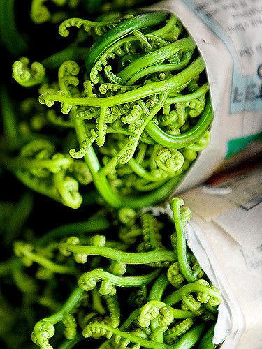 Fiddlehead ferns wrapped in newspaper at the Hilo Farmer's Market, Pete Orelup