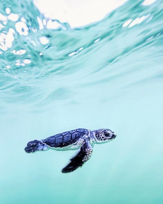 Vsco Girls Relate In 2021 Cute Baby Turtles Baby Sea Turtles Sea Turtle Facts