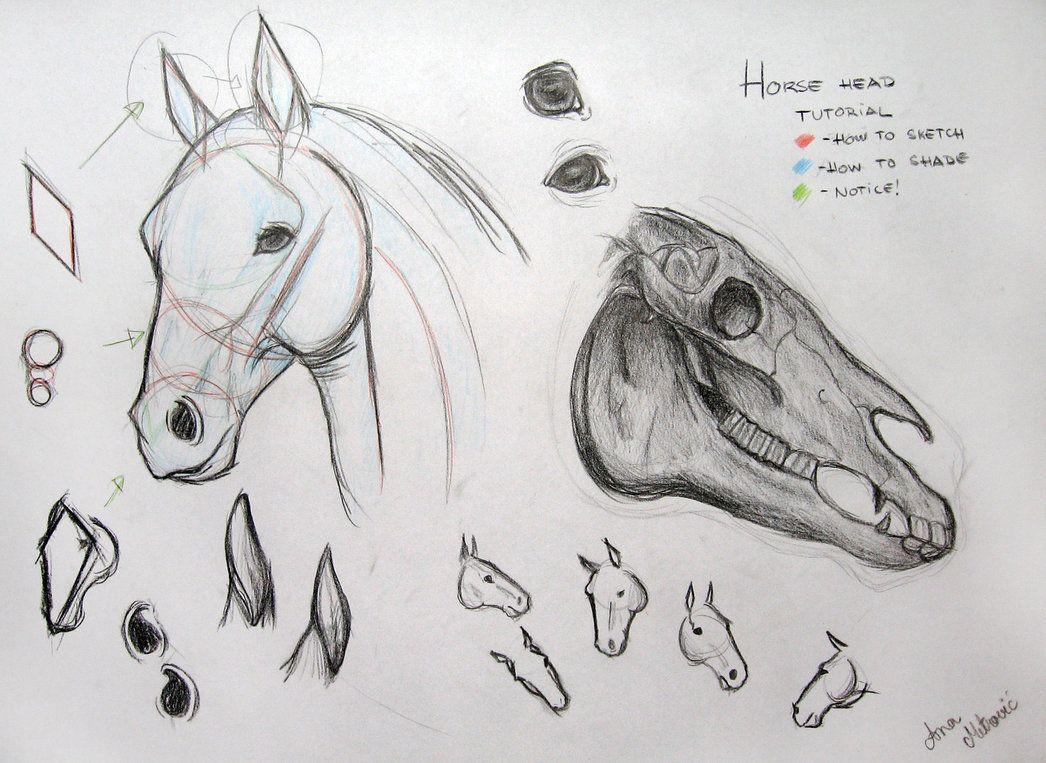 Line Art Photo Tutorial : Horse head tutorial by aninsvet rysowanie koni pinterest