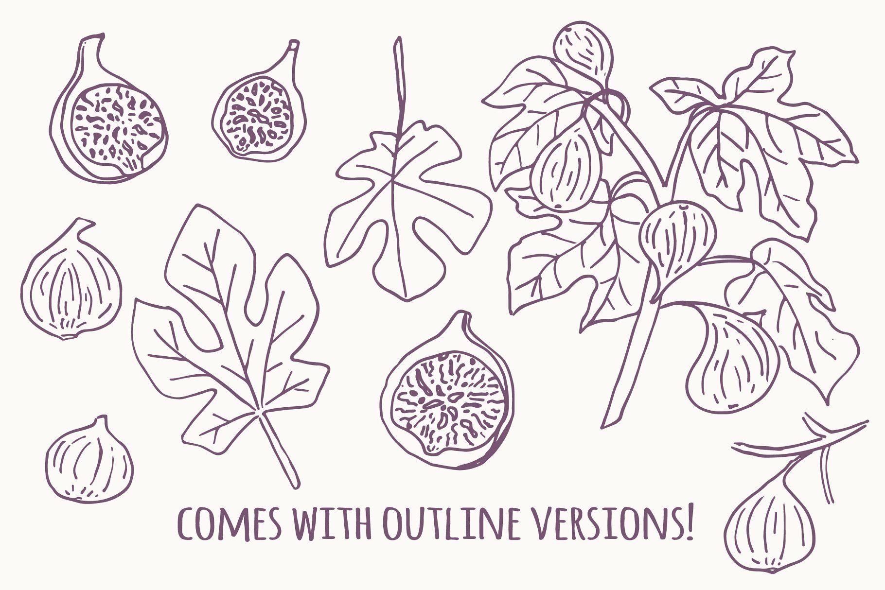 Hand Drawn Figs Clip Art Clip Art Branding Design Logo Graphic Illustration