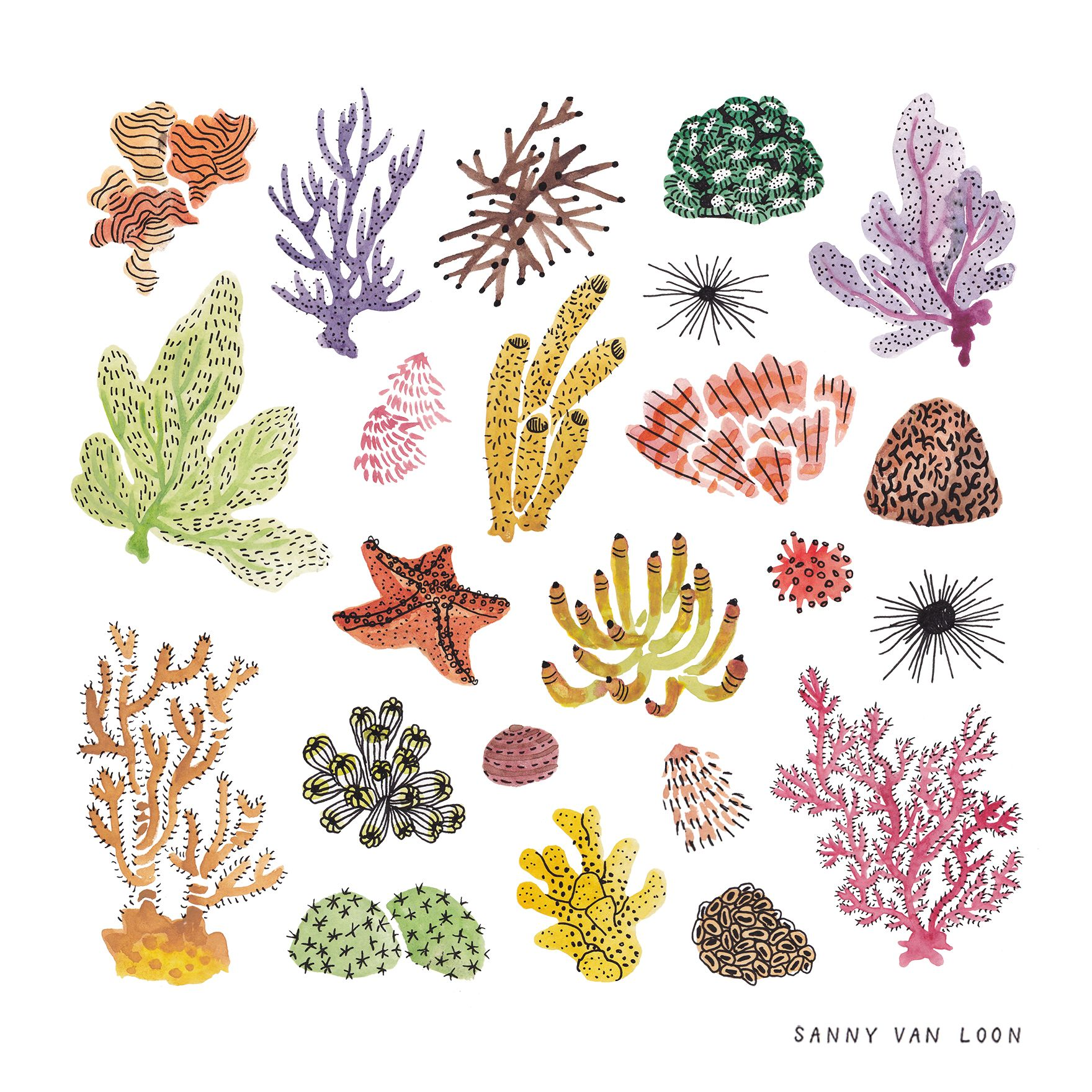 Corals Of The Caribbean Sea By Sanny Van Loon