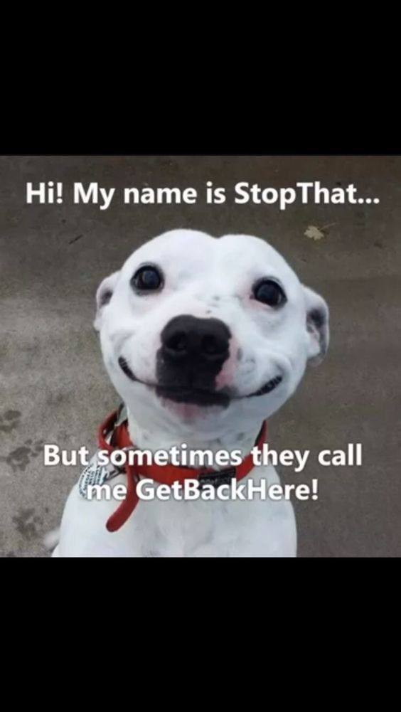 Hi! My name is Stop That.... But somtimes they call me ...