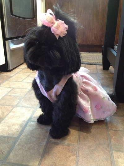 """Please vote for this entry in I Dream of Being a """"COVER DOG"""" Contest!!"""