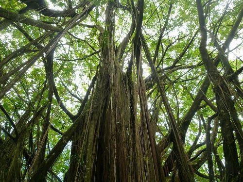 National Park in Hilo  Big Island
