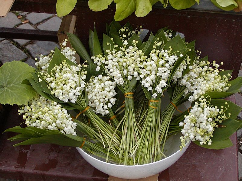Photo Lily Of The Valley Plant Lily Of The Valley Lily Vases Lily