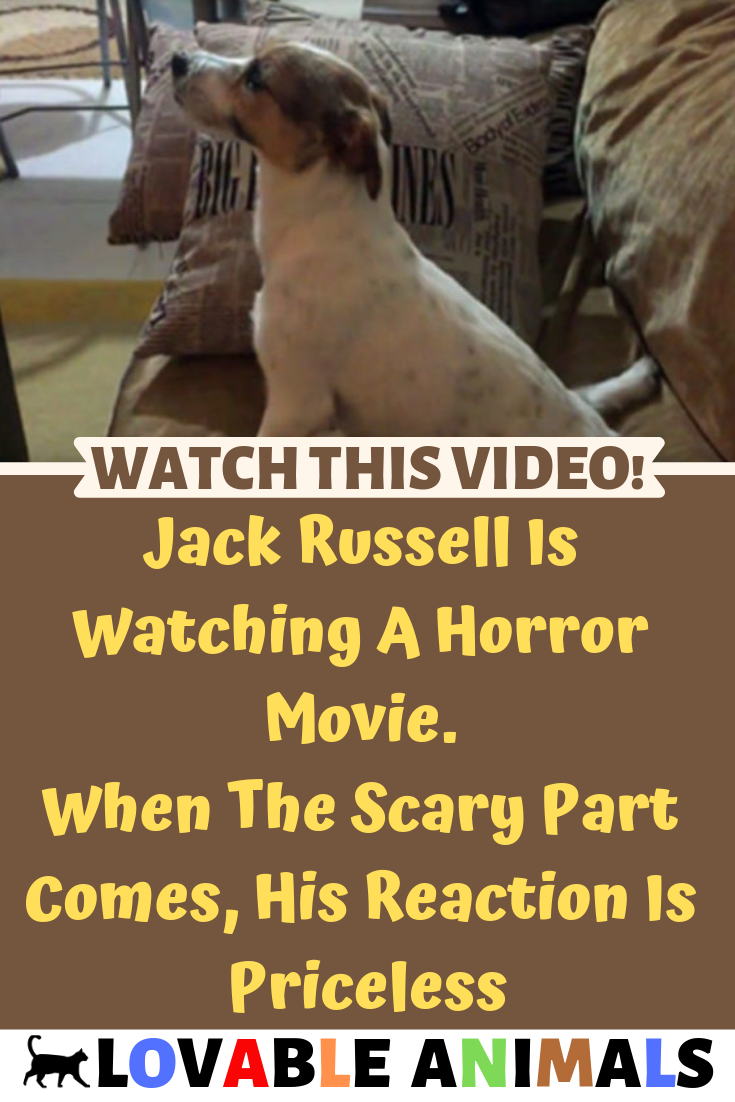 Pin By Stacy Ann Correll On Dogs Jack Russell Horror Movies Horror