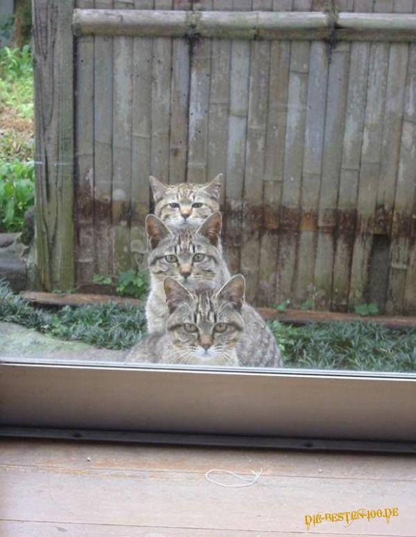 Die besten 100 Bilder in der Kategorie katzen: 3 Katzen