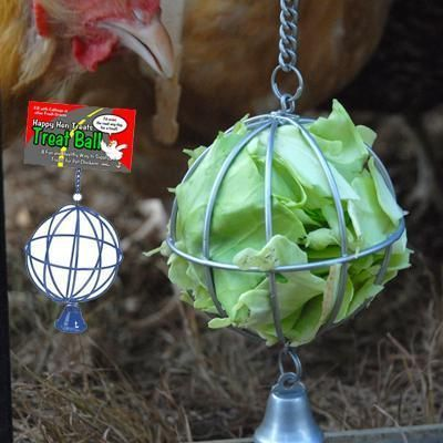 I tried hanging a cabbage head with string but it didn't work so well.  This is a great idea.  Gives the chickens something to do.  http://www.arcatapet.com/item.cfm?cat=16295
