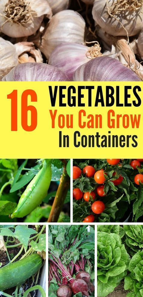 Try your hand at container gardening with these 16 delicious vegetables that are perfect for growing in containers