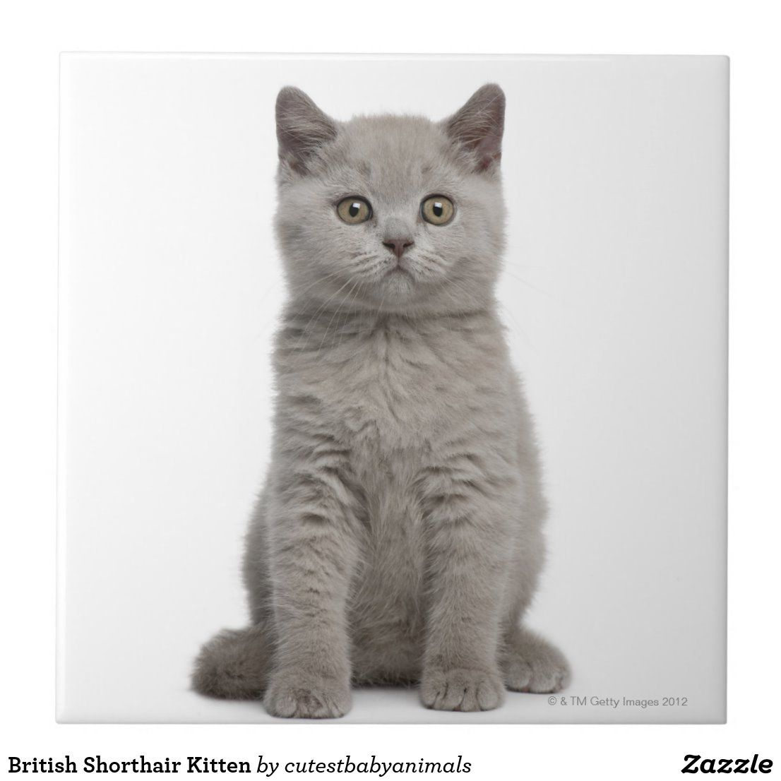 British Shorthair Kitten Tile Zazzle Com In 2020 British Shorthair Kittens British Shorthair Kitten