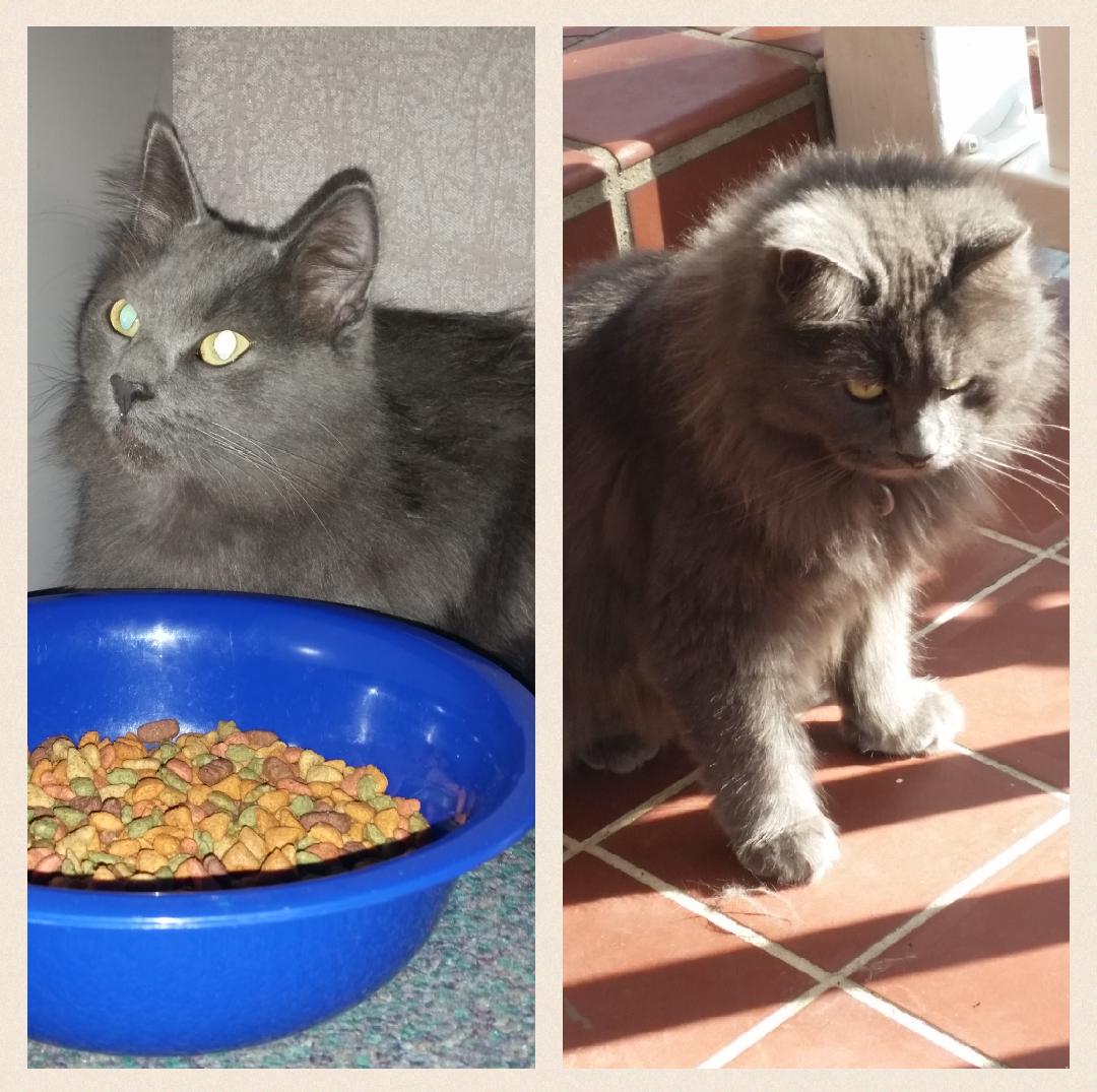 Took in an alley cat from work a few months back. Her transformation. http://ift.tt/2iAantr