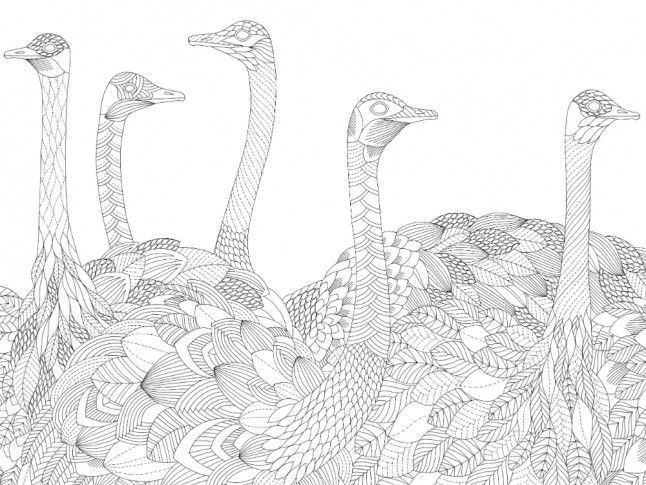 Mc meets millie marotta best selling adult colouring book illustrator marie