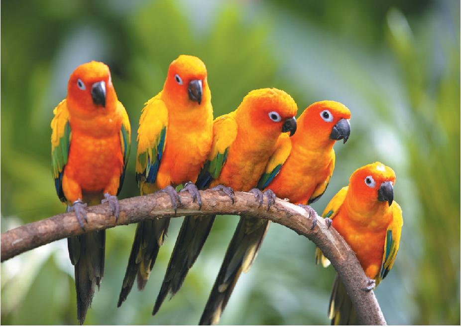 Pet Travels Sri Lanka Aves De Estimacao Aves Exoticas Passaros Coloridos