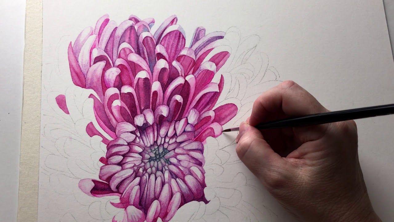 Pink Chrysanthemum In Watercolor Chrysanthemum Painting Flower Painting Watercolor