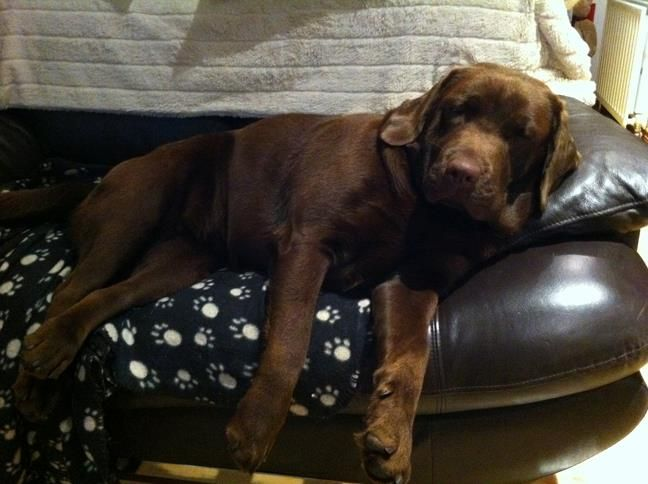 Just chillin'. I love the dog paw throw! :-)