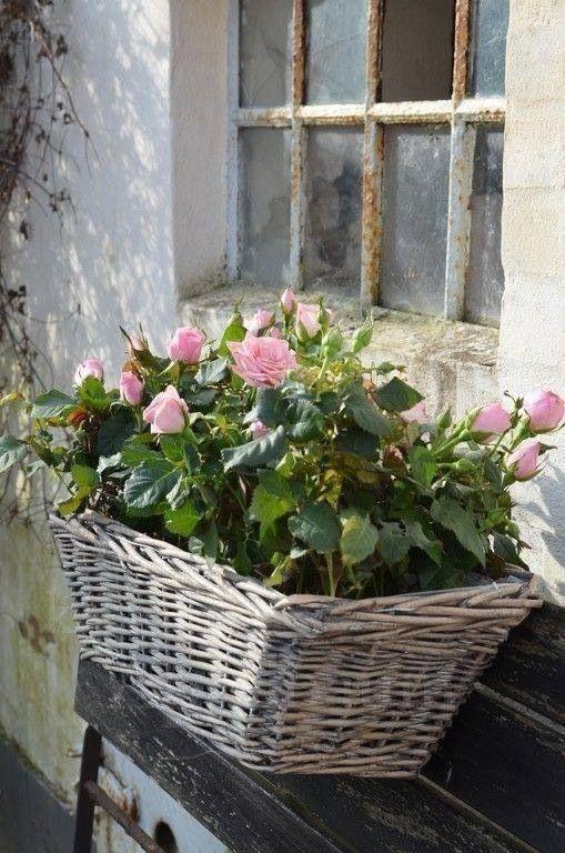 pin von moment s auf rosen pinterest g rten balkon und blumen. Black Bedroom Furniture Sets. Home Design Ideas
