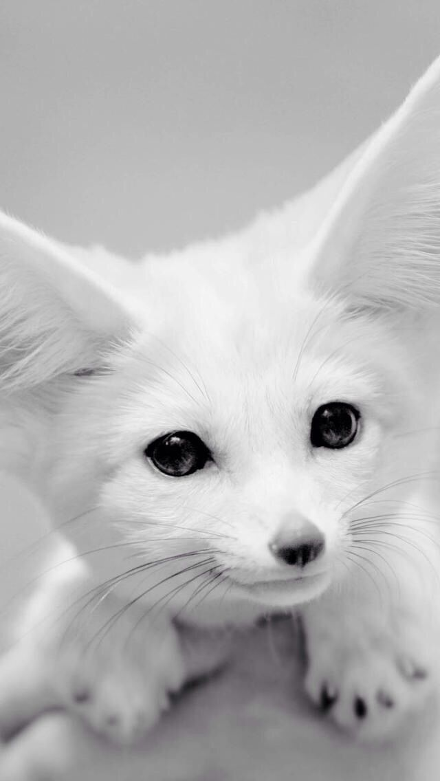 So cute!! If you don't know this is a fennec fox.