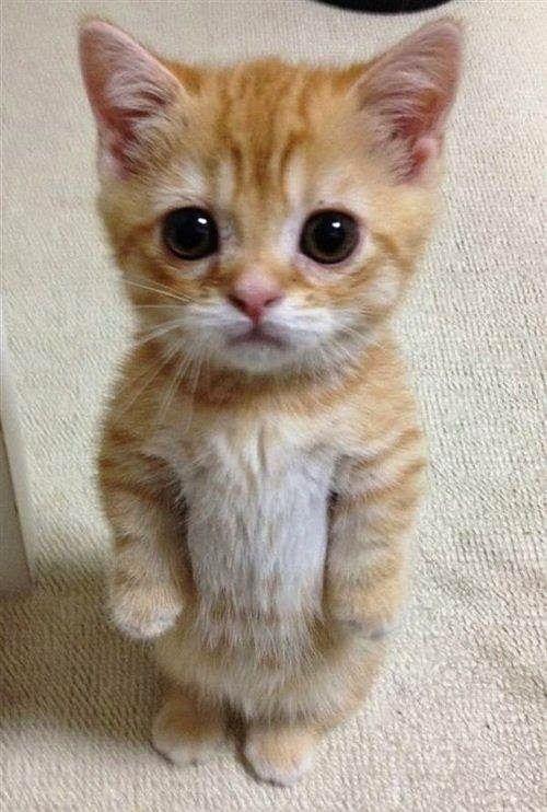 Mega Cute