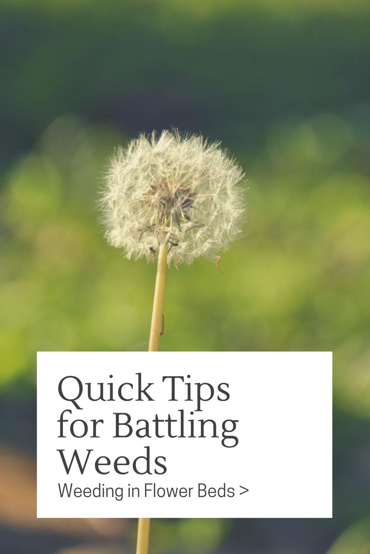 Quick Tips For Battling Weeds Glover Nursery