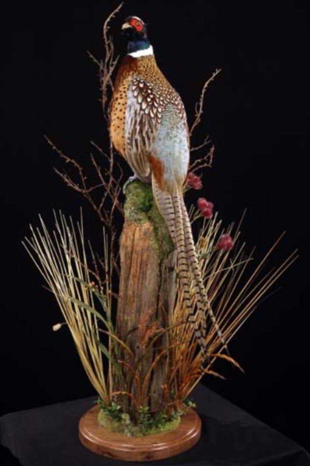 Fence Post Pheasant Taxidermy Decor Waterfowl Taxidermy Bird Taxidermy