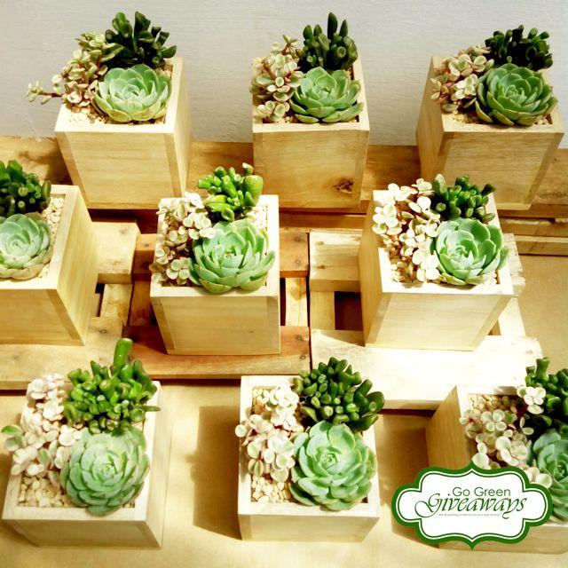 Succulents Arrangement Wedding Souvenirs Manila Wedding Hadiah Pesta Pesta Tanaman