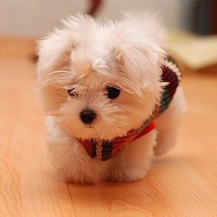 Second dog I want :)