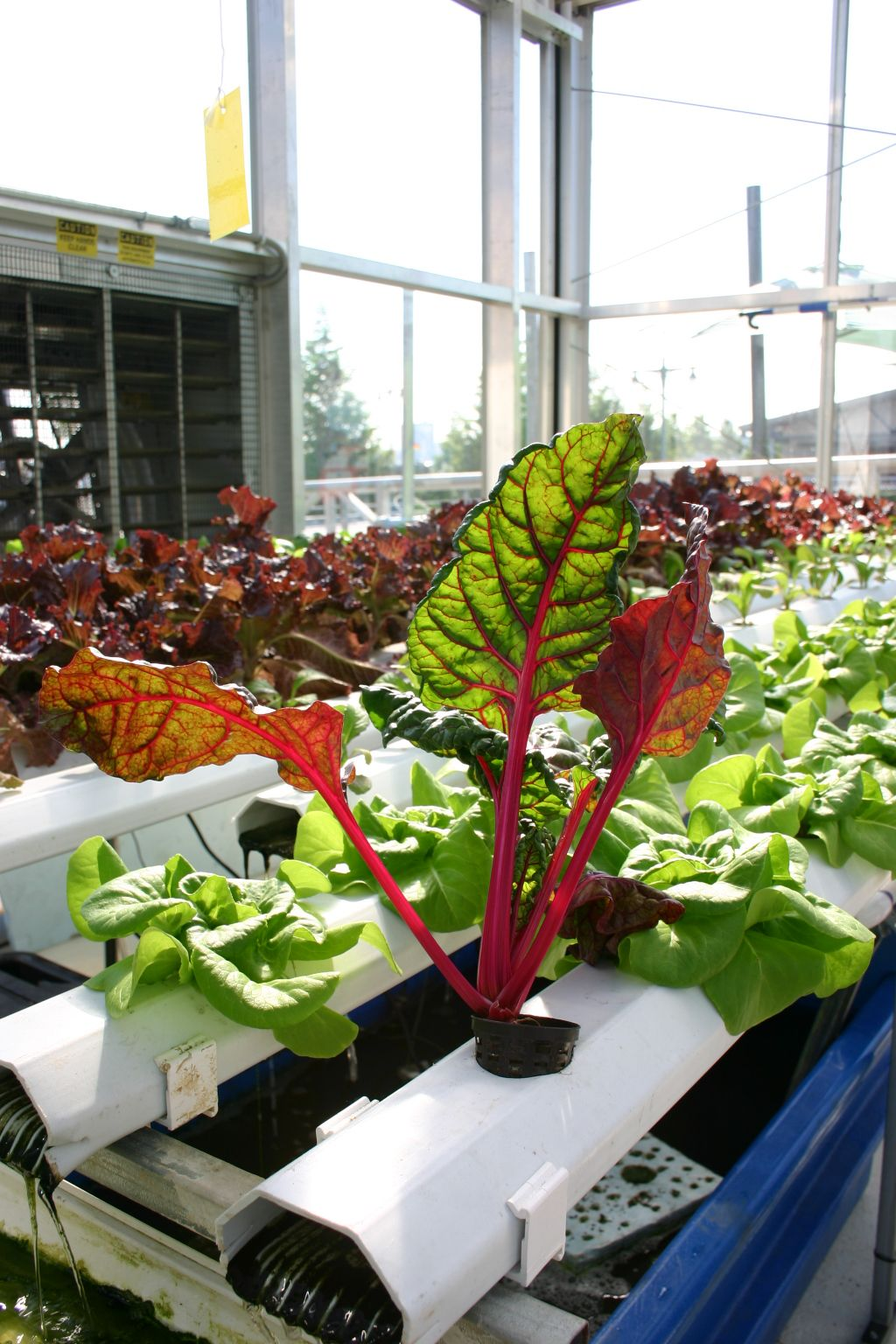Aquaponics uses approximately 2% of the water that a conventionally irrigated farm requires for the same vegetation production!