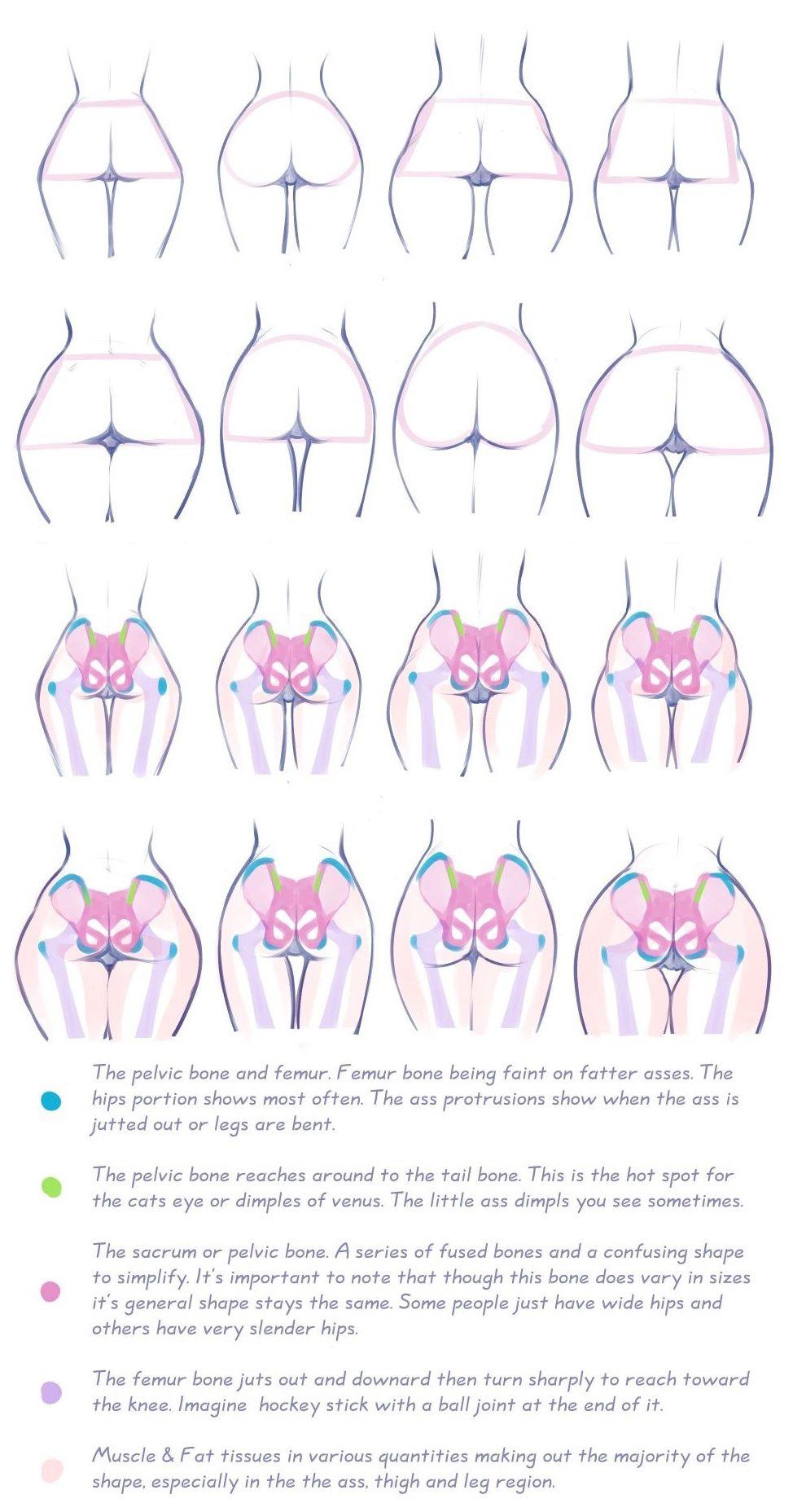 Gluteus Maximus (female). Hip, bones, fat deposit areas. Art by ...