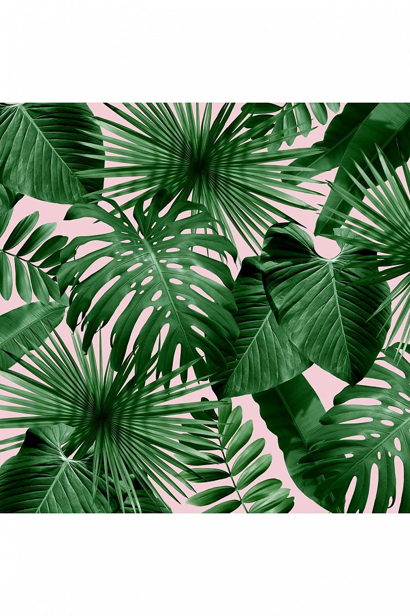 Pin by Shannel Smith on Drawn to it Palm wallpaper
