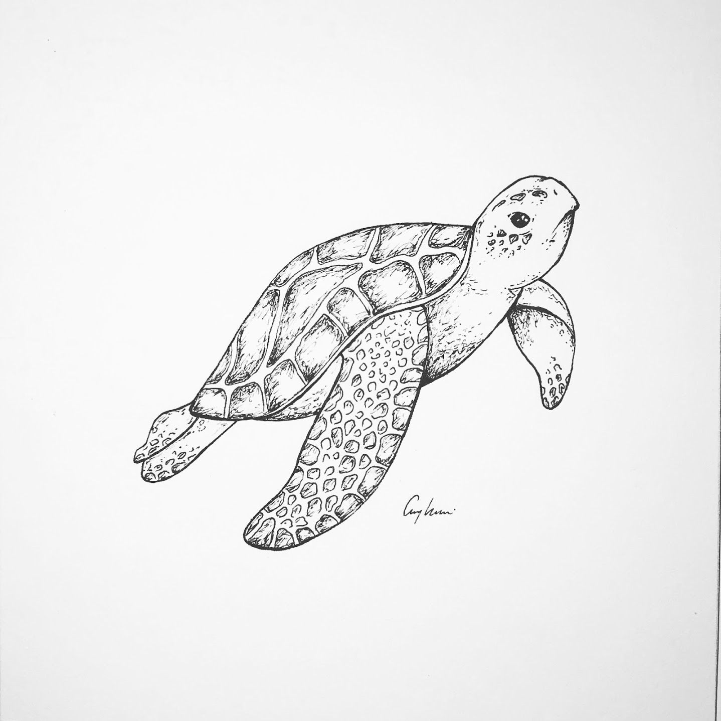 tiny ocean art turtle ocean drawing collection tropical