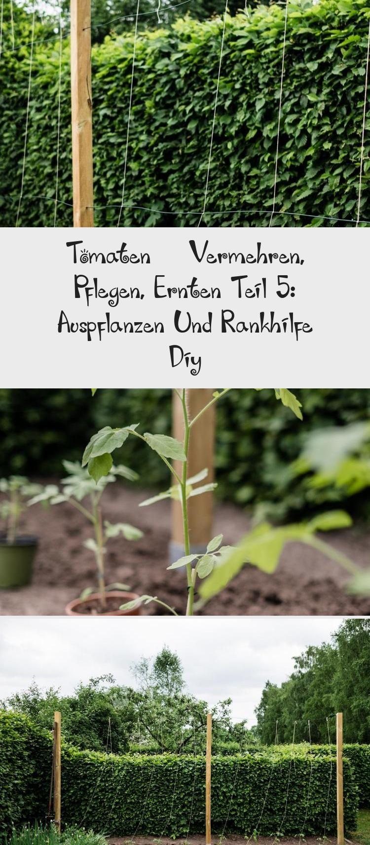 Tomaten Vermehren Pflegen Ernten Teil 5 Auspflanzen Und Rankhilfe Diy In 2020 Plants Herbs Garden