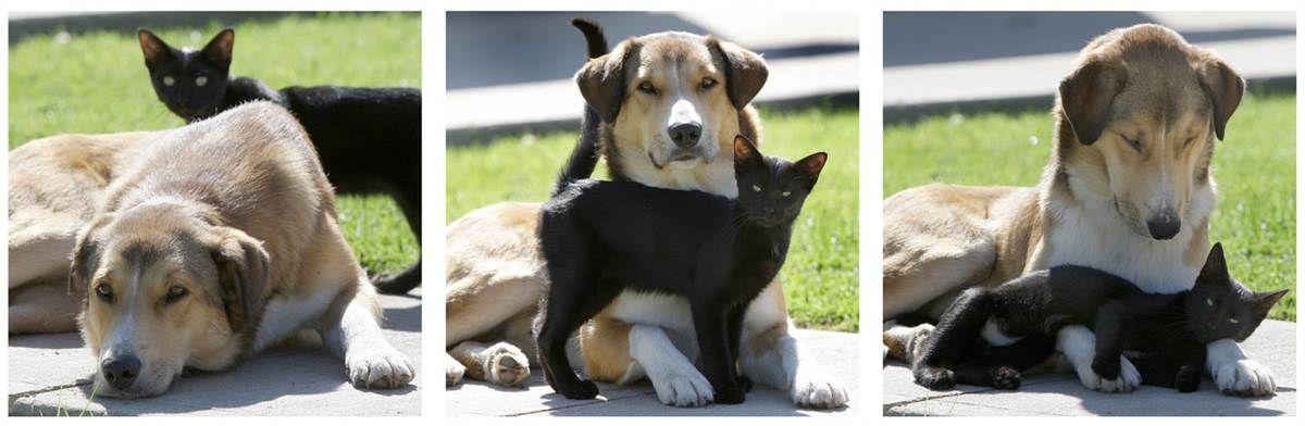 Unlikely Friends Animals Friends Weird Animals