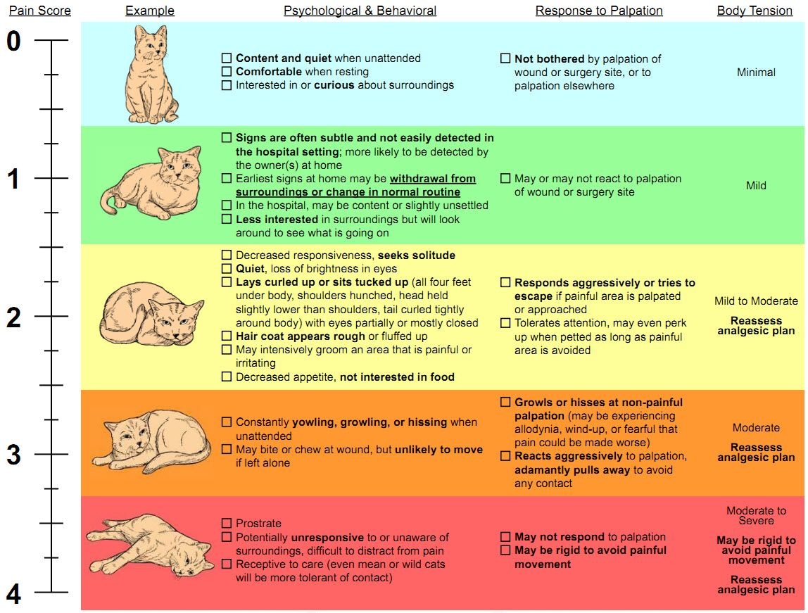Cat pain scale chart is your cat in pain or possibly even cat pain scale chart is your cat in pain or possibly even suffering this nvjuhfo Image collections
