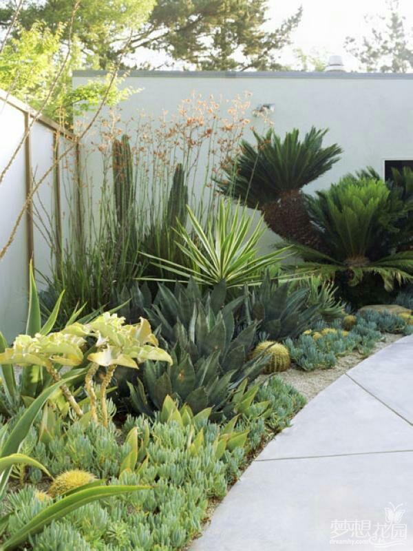 plant waterless garden