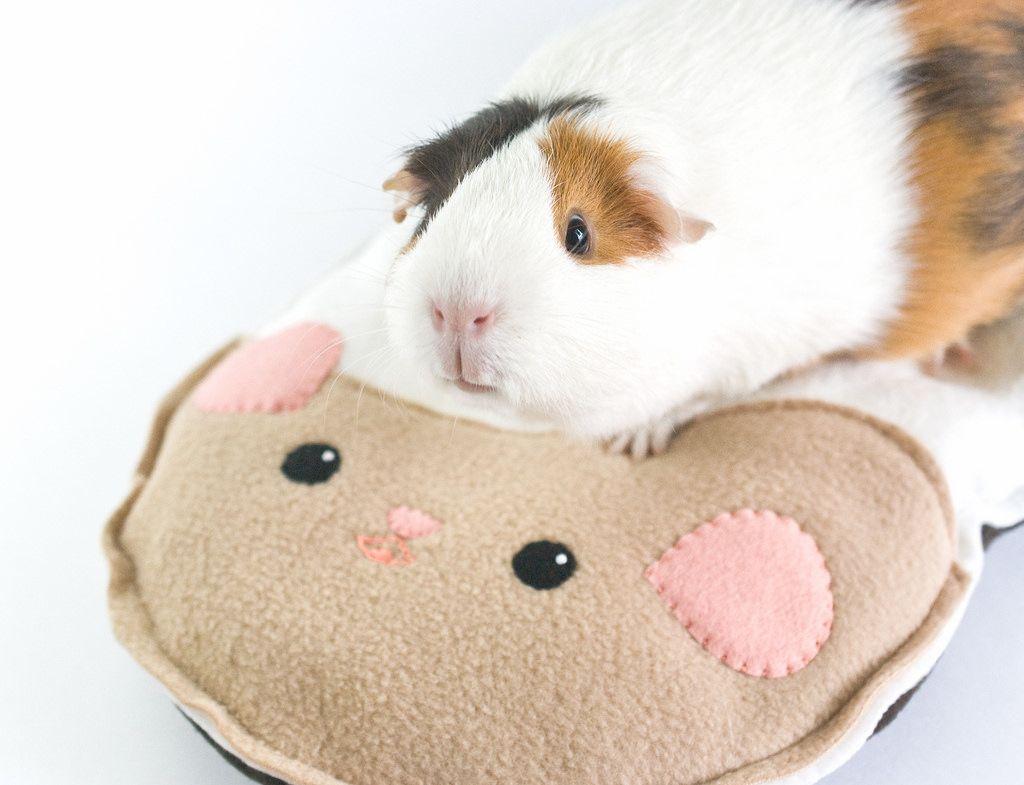 Diy guinea pig toys easy wow blog for Diy guinea pig things
